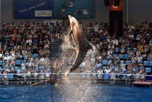 Spectators watch as a dolphin takes part in a performance at Aqua Stadium aquarium in Tokyo on August 11, 2014