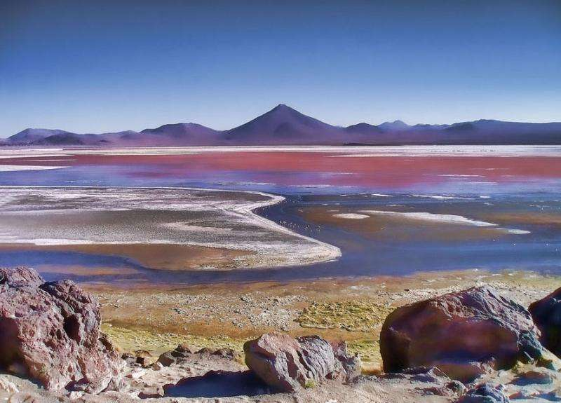 Spectrum of life: Nonphotosynthetic pigments could be biosignatures of life on other worlds