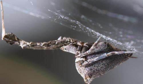 Spider electro-combs its sticky nano-filaments