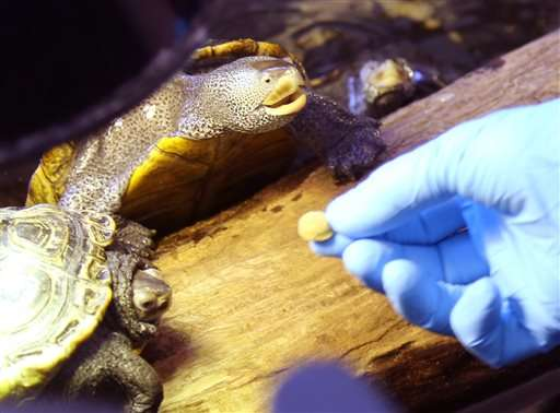 Spike in water toxins blamed for hundreds of turtle deaths