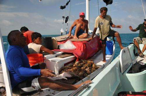 Spiny lobster abundance study at Glover's Reef, Belize finds fishery in good shape