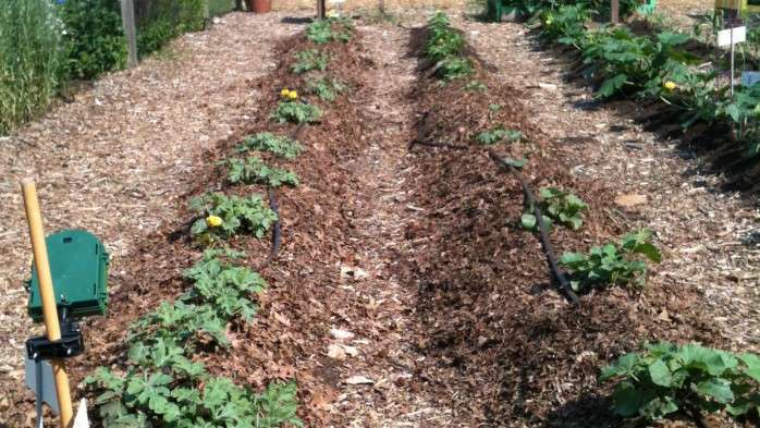 Study finds guidance improves food safety practices at school, community gardens