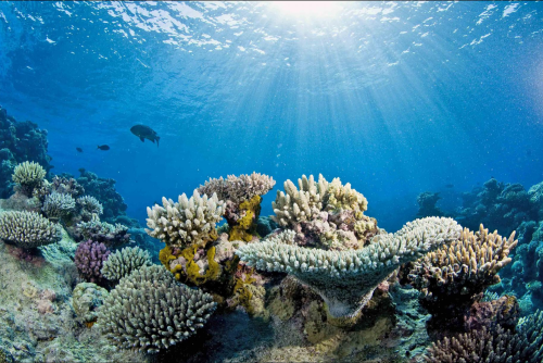Study projects unprecedented loss of corals in Great Barrier Reef due to warming