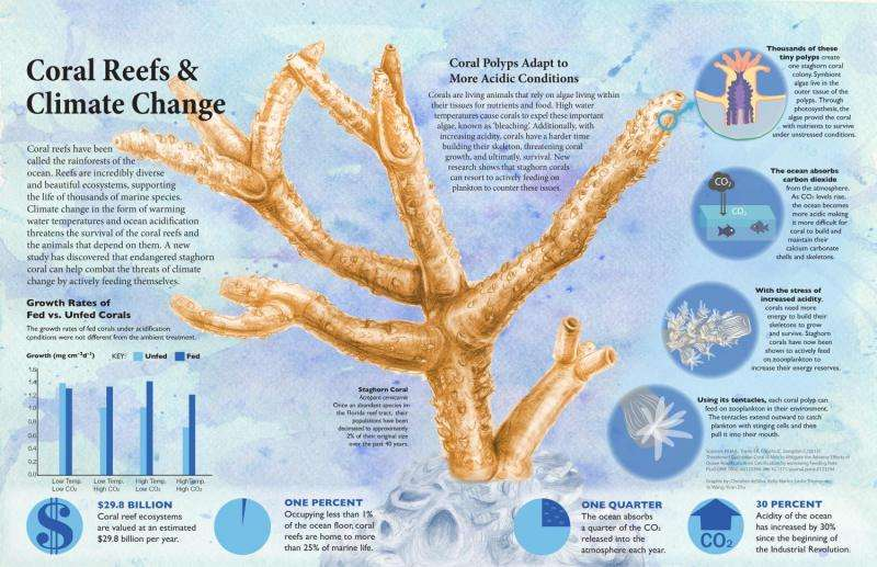 Study shows dietary supplements are good for coral health