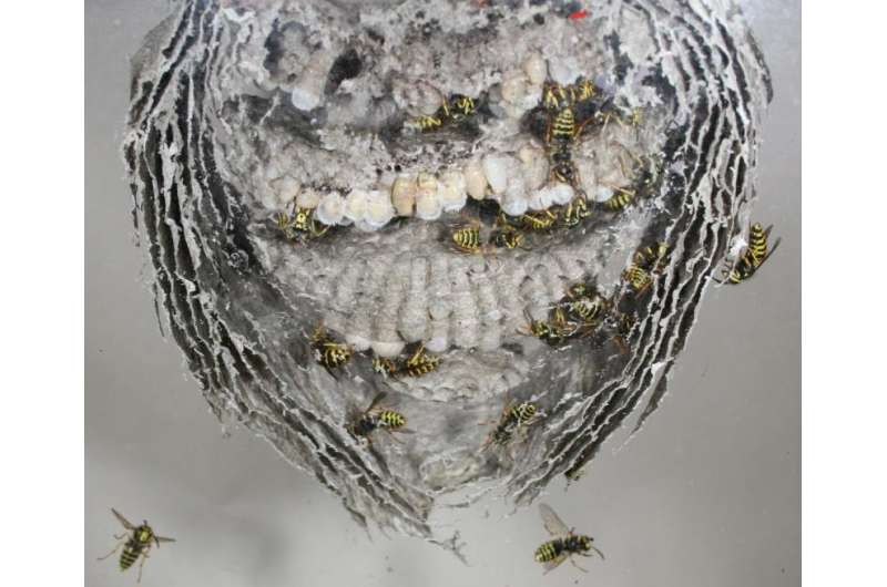 Study spells out why some insects kill their mothers