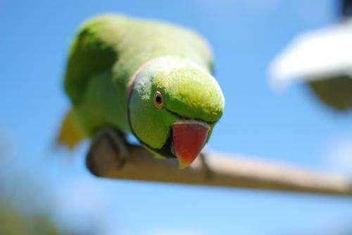 Supplemental feeding for endangered avian species