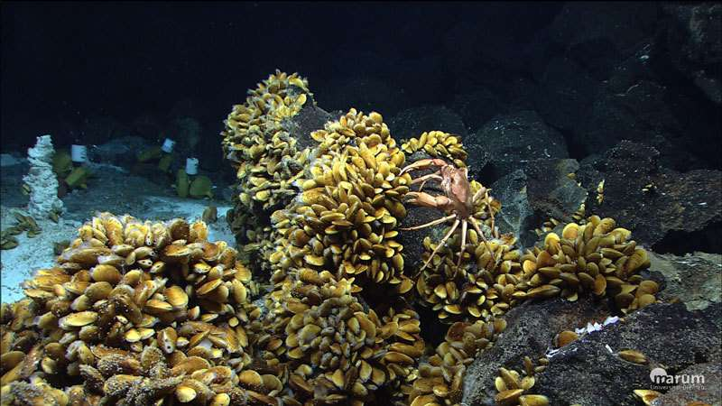 Symbiosis bacteria produce a variety of toxins that appear to save mussels from being eaten