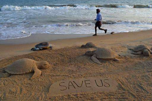Tens of thousands of endangered sea turtles die every year in the United States when they are inadvertently snared in shrimp net