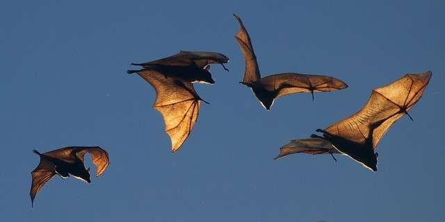 The awesomeness of bats
