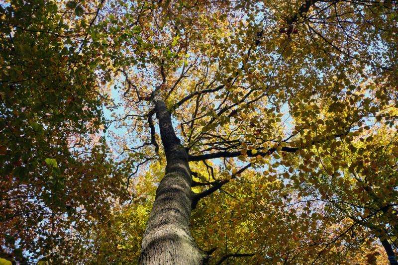 The influence of increased atmospheric CO2 concentration on European trees