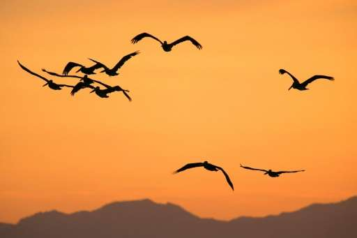 The number of birds migrating south from chilly North America to warmer South America this time of year has dropped sharply comp