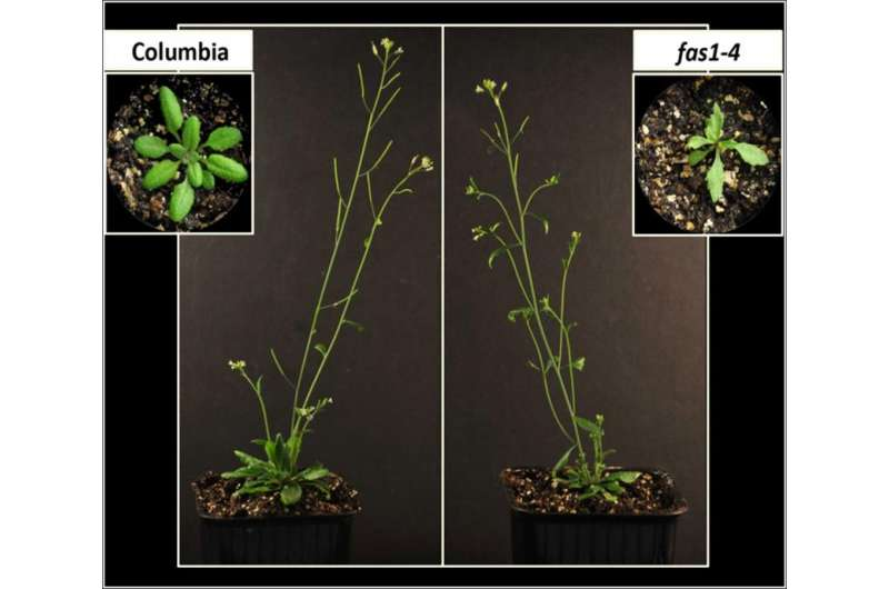 The regulation of meiotic crossover in plants