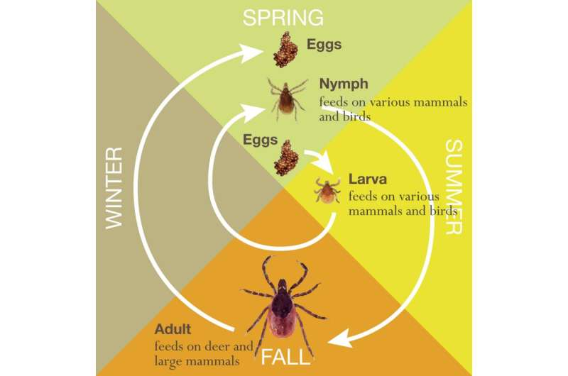 Time to move Lyme Disease Awareness Month to April?