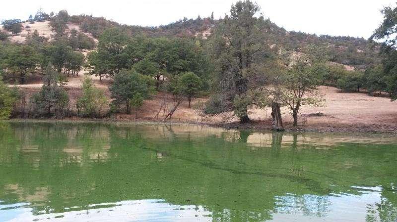 Toxic blue-green algae pose increasing threat to nation's drinking, recreational water