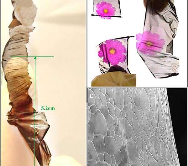 transparent graphene paper