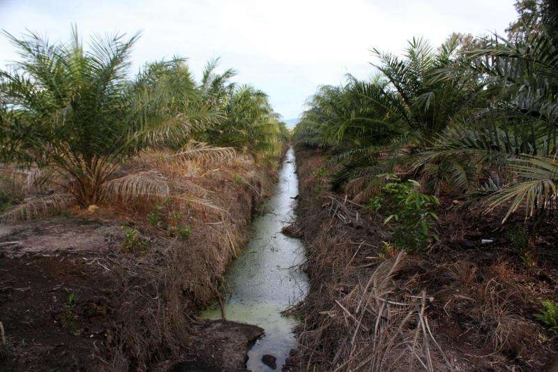 Tropical peatland carbon losses from oil palm plantations may be underestimated