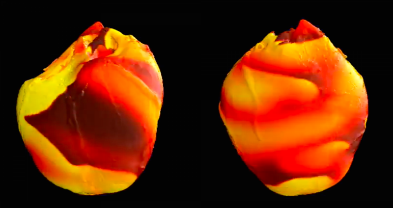 UMD scientist to develop virtual 'CyberHeart' to test, improve implantable cardiac devices