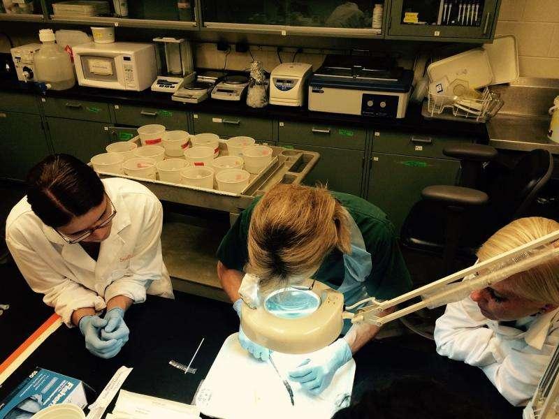 UTIA professors help launch new online wildlife disease reporting system