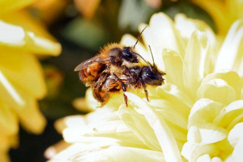 Vibrations tell bees where mates are from