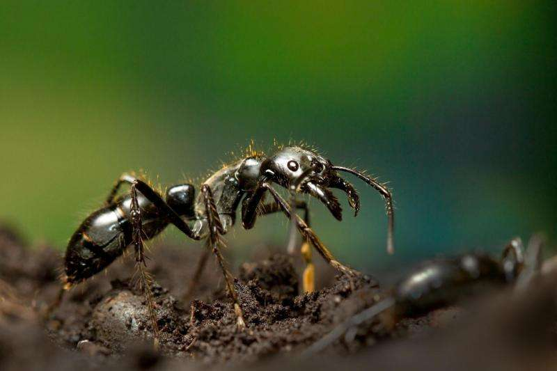 Video and research release: How insects become queens or workers