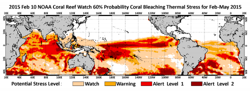 Warm ocean temperatures may mean major coral bleaching