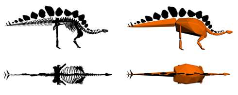 Weight of the world's most complete Stegosaurus revealed