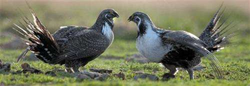 Western governors tout sage grouse conservation efforts