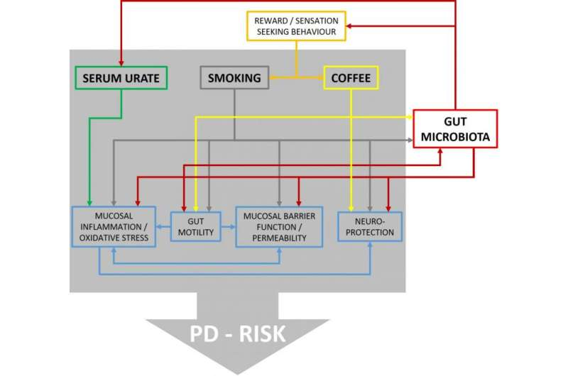 What is the role of the gut microbiome in developing Parkinson's disease?