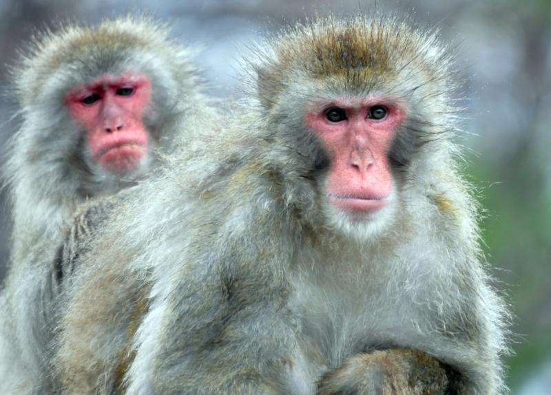 What we can learn from primate personality