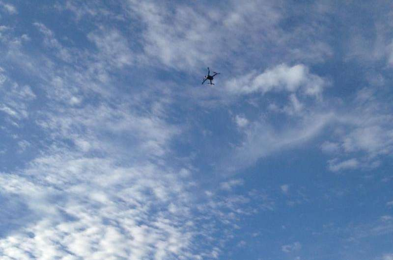 When a 'UFO' flies by, does it bother bears?