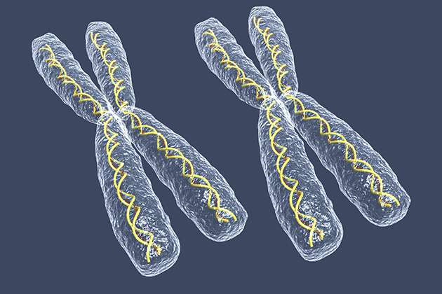 When extra X chromosome won't stay silent, rogue RNA may be to blame