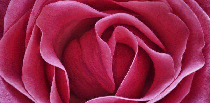 Why do people feel 'a rose by any other name' wouldn't fit as well?