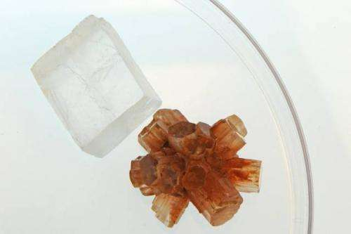 Why seashells' mineral forms differently in seawater