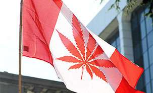 Why would a criminologist support the legalization of marijuana?