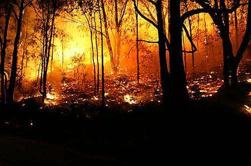 Wildfire critical in calculating carbon-payback time for biomass energy projects
