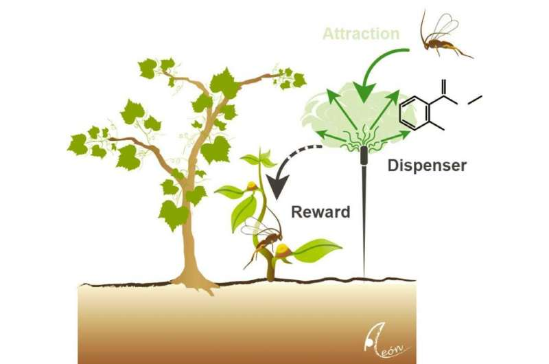 Wild plants call to carnivores to get rid of pests -- could crops do the same?