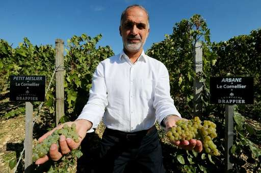 Winegrower and Champagne producer Michel Drappier shows off his grapes at his vineyard in Urville, eastern France