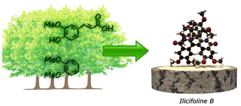 Wood instead of petroleum: New approach to producing chemical substances solely from renewable resources