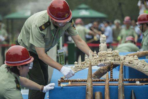 Workers put ivory items on a sliding belt before being destroyed in Beijing on May 29, 2015