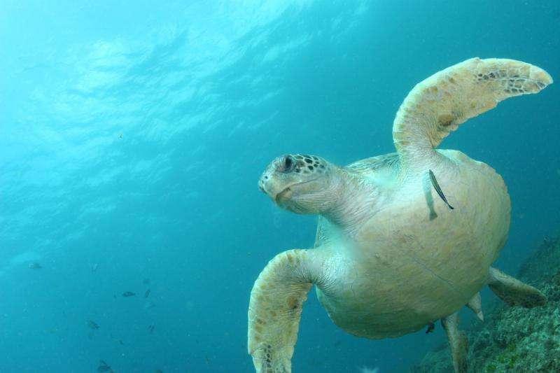 World's turtles face plastic deluge danger