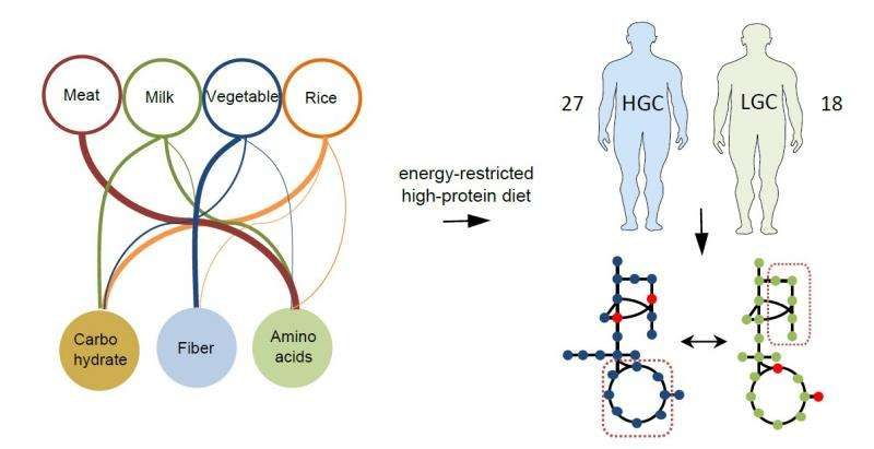 Your stomach bacteria determines which diet is best for weight reduction