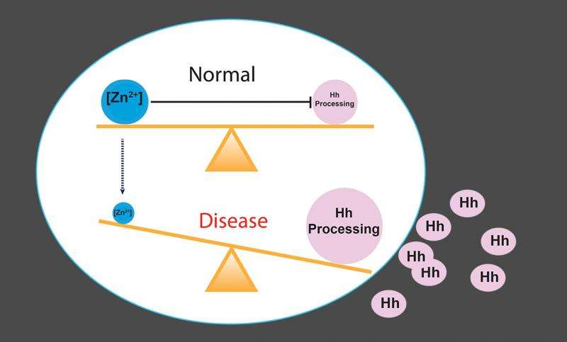 Zinc deficiency linked to activation of Hedgehog signaling pathway