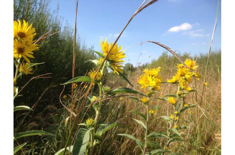 Agroforestry helps farmers branch out