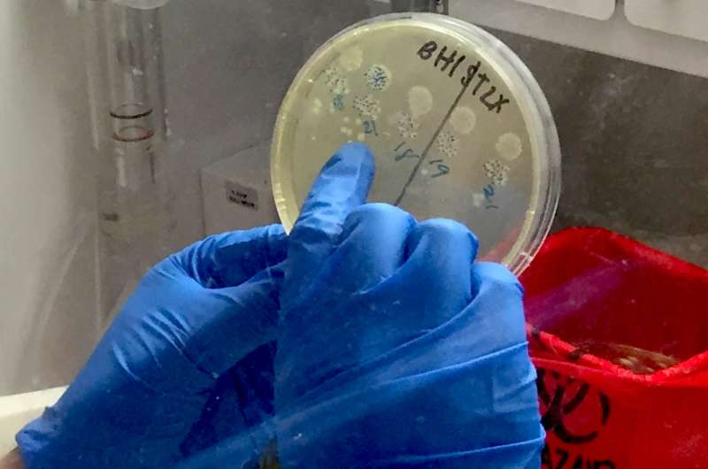 Allergy-causing 'bad guy' cells unexpectedly prove life-saving in C. difficile