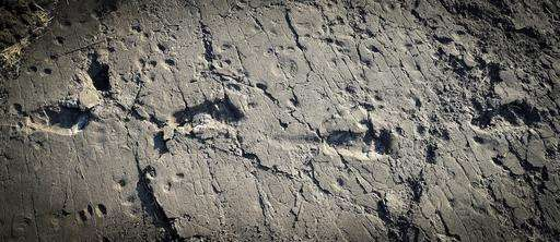 Ancient human ancestor was one tall dude, his footprints say