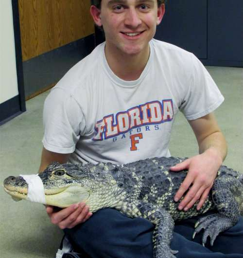 A reptilian anachronism: American alligator older than we thought