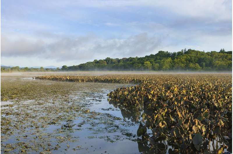 As sea level rises, Hudson River wetlands may expand