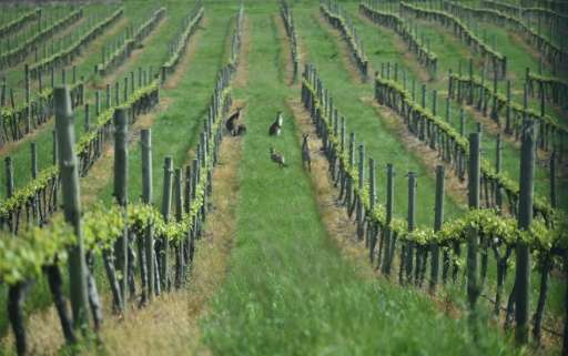Australia is the world's fourth-largest wine exporter by value, with an industry worth Aus$2 billion