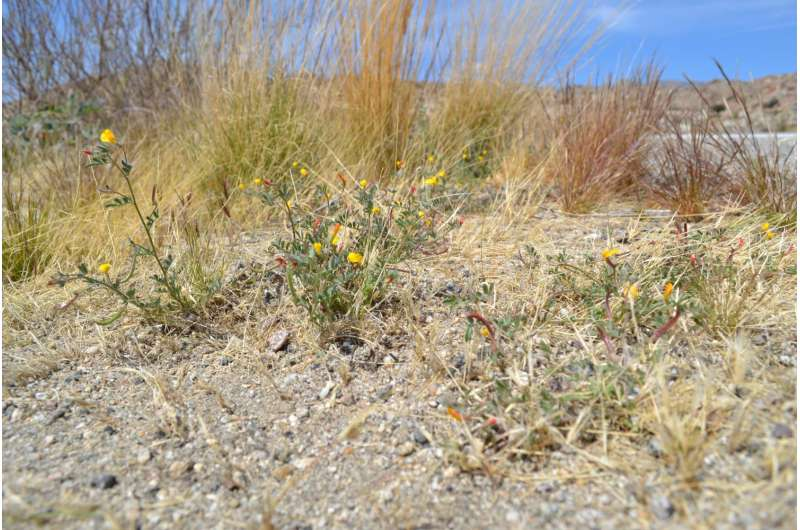 Bacteria beneficial to plants have spread across California