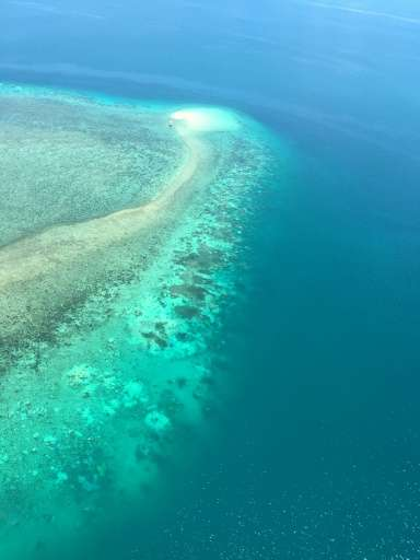 Bleaching occurs when abnormal environmental conditions cause corals to expel tiny photosynthetic algae, draining them of their